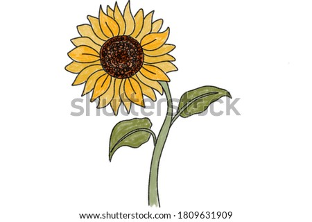 Sunflowers or Helianthus flowers a symbol of adoration and loyalty watercolor painting Stock photo © shawlinmohd