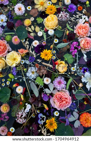 Dynamique fleurs du printemps plein fleurir blanche Photo stock © cmcderm1