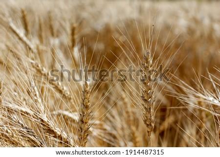 brilhante · amarelo · agrícola · pormenor · rodas · mecanismo - foto stock © rekemp
