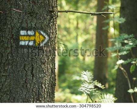 Wandelen geschilderd boom schors borden Stockfoto © zurijeta
