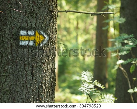 Hiking mark painted on tree bark, hiking signs, hiking marks. Re Stock photo © zurijeta