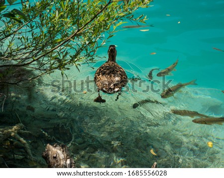 Majestic view on turquoise water and sunny beams. Location Plitv Stock photo © Leonidtit