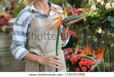 Female hands holding a small bouquet of strelitzia on a green ba Stock photo © artjazz