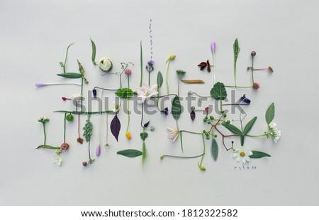 esqueleto · folhas · flor · preto · projeto · vermelho - foto stock © artjazz