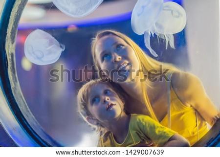 Mamãe filho assistindo água-viva azul aquário Foto stock © galitskaya
