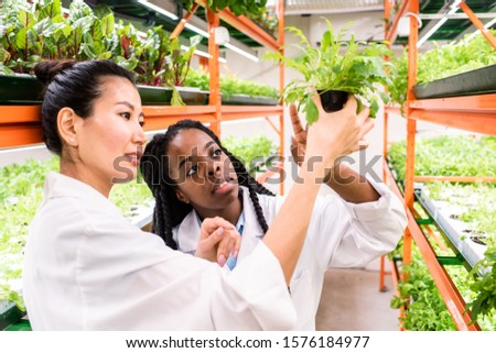 Kettő fiatal női megbeszél zöld növény Stock fotó © pressmaster