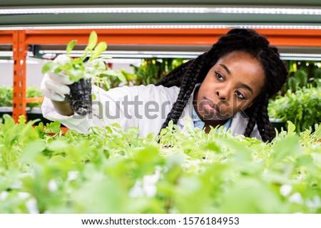 Fiatal afrikai női biológus elvesz zöld Stock fotó © pressmaster