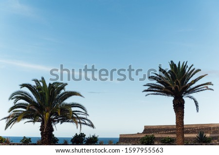 Tropical palm tree leaves sway in a gentle breeze against blue sky Stock photo © ruslanshramko