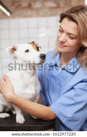 Happy experienced female vet examines jack russel terrier dog, gives advice how to care about animal Stock photo © vkstudio