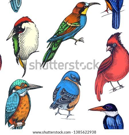 Northern cardinal or Cardinalis cardinalis bird seamless watercolor birds painting background Stock photo © shawlinmohd