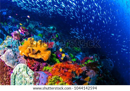 Subacquea vita panorama pesce Ocean Foto d'archivio © galitskaya