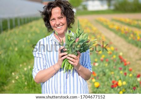 Stock photo: tulip 38
