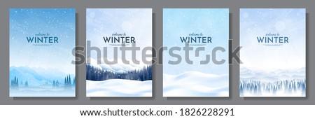 winter · ochtend · pine · zonlicht · sneeuw · zonsondergang - stockfoto © smuki