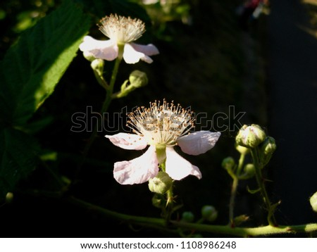 Macro of Wild Flower Insides from the Northwest Pacific of USA  Stock photo © tab62