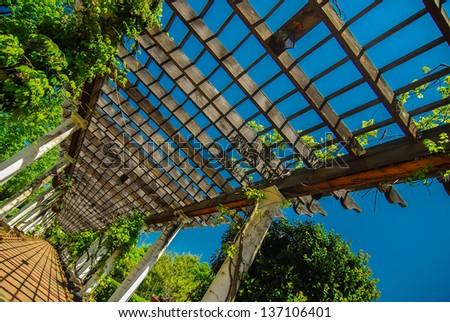 Garden Lattice walkway with stone pavers and vine flowers throug Stock photo © alex_grichenko