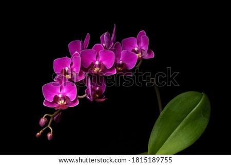 pembe · orkide · şube · yalıtılmış · beyaz · bahçe - stok fotoğraf © meinzahn