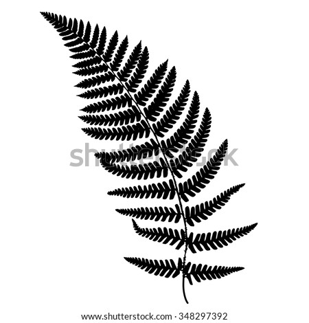 fern frond black silhouette vector illustration forest concept stock photo © gladiolus