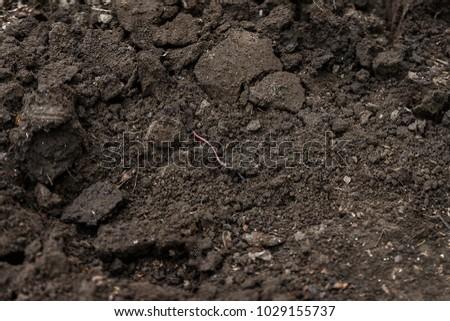 Foto stock: Fora · buraco · jardim · pá · terreno · natureza