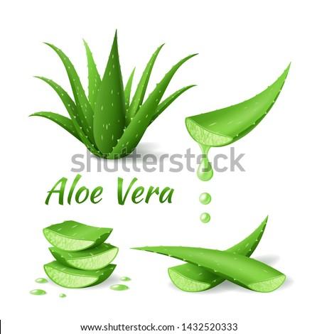 Aloë blad realistisch groene plant bladeren Stockfoto © MarySan