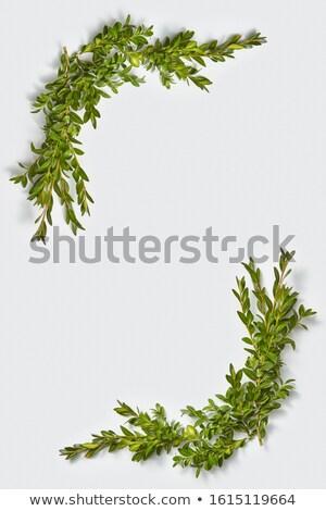 Verticale angolo frame evergreen foglie impianto Foto d'archivio © artjazz