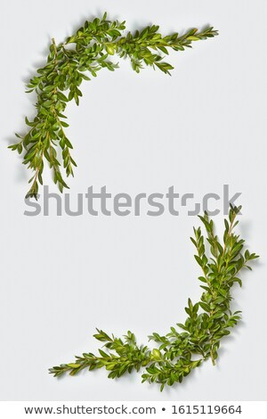 Vertical canto quadro sempre-viva folhas planta Foto stock © artjazz