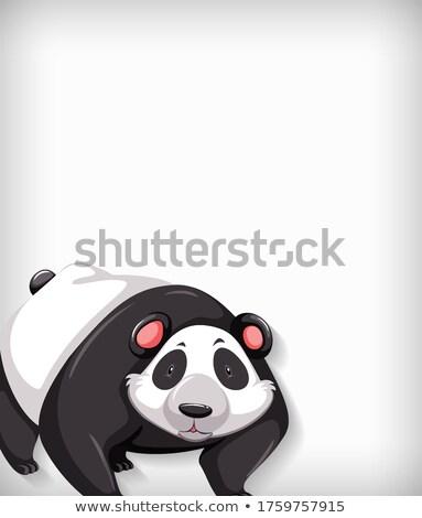 Plantilla diseno color panda ilustración pared Foto stock © bluering