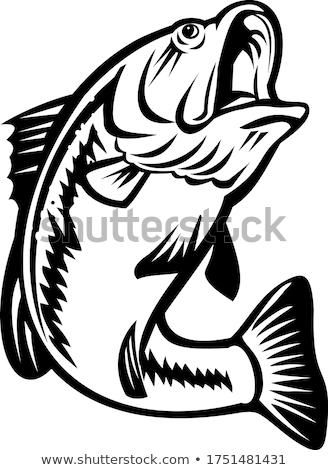 Basszus úszik lefelé feketefehér retro illusztráció Stock fotó © patrimonio
