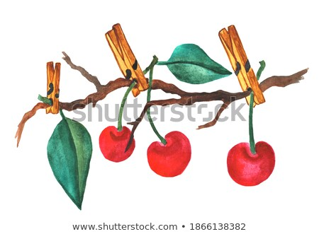 Sweet red cherries and clothes line Stock photo © caimacanul