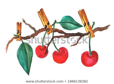 cerejas · branco · foto · delicioso · isolado · folha - foto stock © caimacanul
