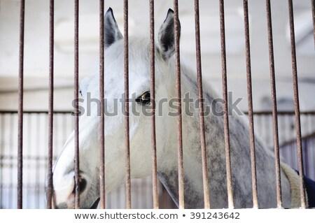 ló · mögött · kerítés · naplemente · étel · tájkép - stock fotó © joyr