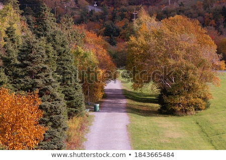 Сток-фото: Long Green Grass In Autumncoloring Yelloworange And Red