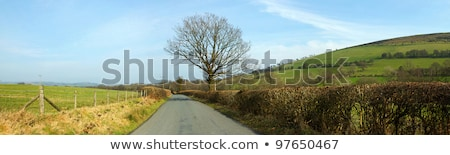 Narrow country road panorama near Garth, Wales UK. Stock photo © latent