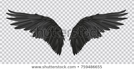 Angel Wings & Demon Wings Vector illustrations Stock photo © chromaco