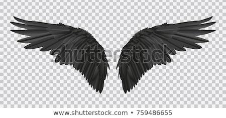 Stock foto: Angel Wings Demon Wings Vector Illustrations