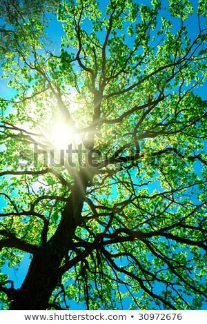 crone of tree on a sky abstract stock photo © ryhor