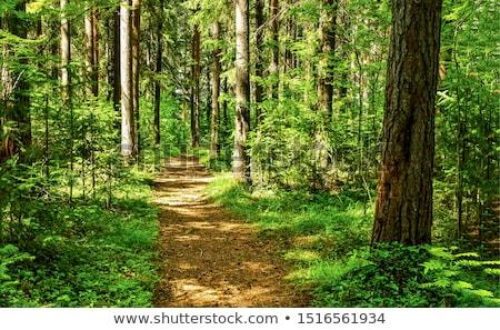 erdő · ösvény · lépcsősor · kopott · fa · út - stock fotó © witthaya