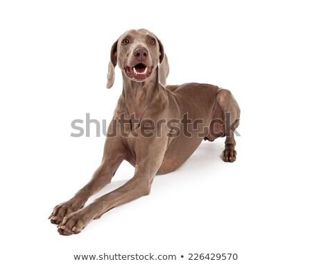 Kutya kert lány tavasz baba boldog Stock fotó © CaptureLight