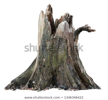ストックフォト: 壊れた · 木の幹 · 古い · 公園 · 路地 · ツリー