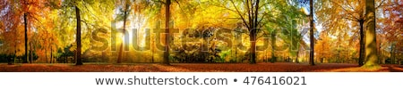 Sonbahar manzara güzel ağaç güneş gün batımı Stok fotoğraf © razvanphotos
