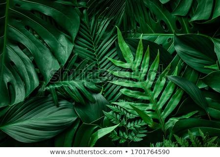 foliage stock photo © leonardi