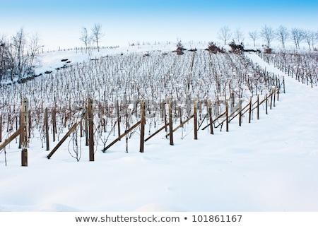 Stok fotoğraf: Tuscany Wineyard In Winter