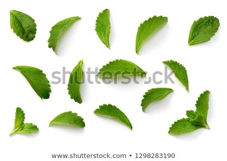 friss · szöveg · levelek · írott · zöld · aprított - stock fotó © olivier_le_moal