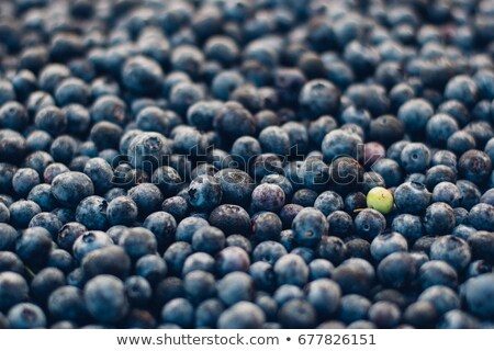 Standout Blueberry Stock photo © Gordo25