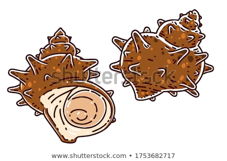 vector · icon · trompet · shell - stockfoto © zzve