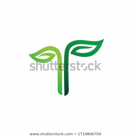 весны дерево письма 3d визуализации слово написанный Сток-фото © Florisvis