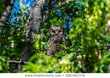 lot of owls sitting in a tree stock photo © popocorn