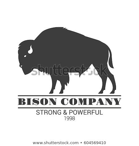 Profile of bison Stock photo © badmanproduction