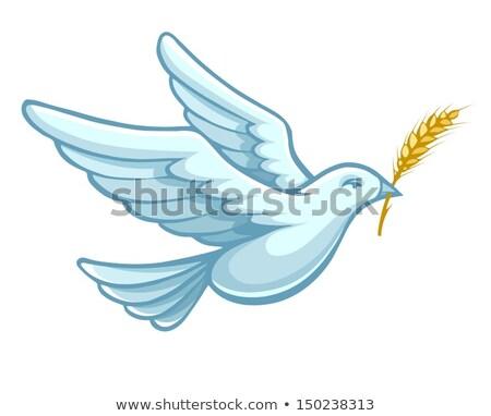Flying голубя птица пшеницы уха вектора Сток-фото © LoopAll