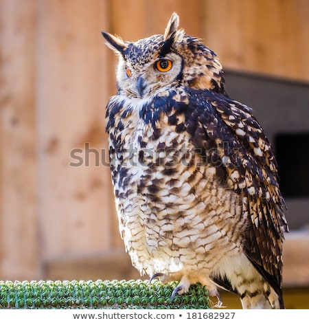 Eagle owl captivité portrait oiseau aigle zoo Photo stock © bradleyvdw