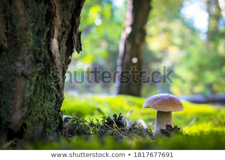 菌 · ツリー · 木材 · 風景 · 光 · グループ - ストックフォト © magann